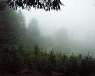 Fog_4x5x300