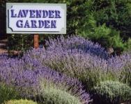 LavenderGarden_4x5x300